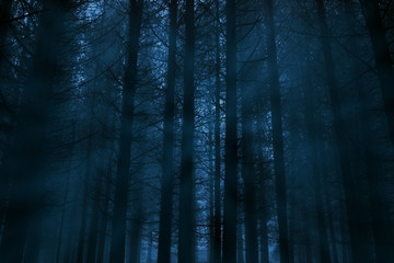 Foggy forest at night