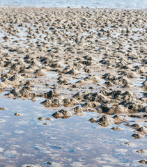 Small muddy heaps on the beach