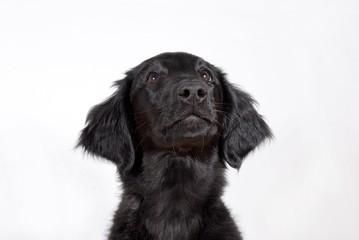 a black puppy