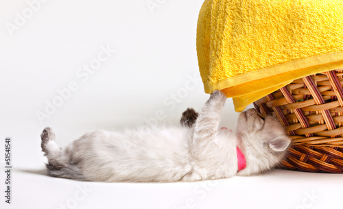 little kitten and towel