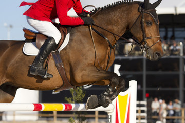 Rider and horse in equestrian jumping obstacles on Show course