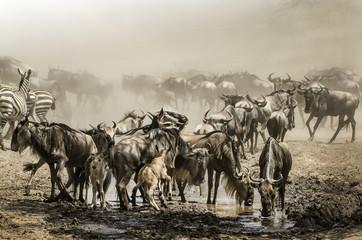 migrazione gnu in background nella sabbia della savana