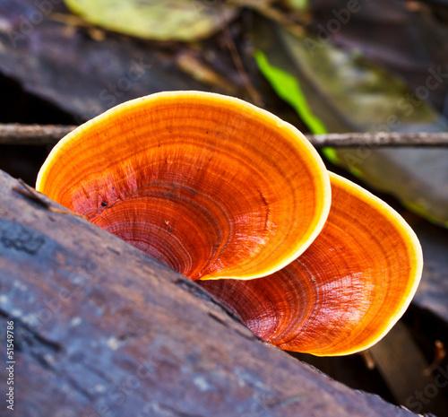 Leinwandbild Motiv Mushrooms in the forest