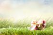 Herz auf Sommerwiese