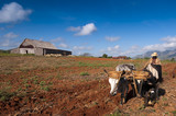 Cuban farmer plows his field with two oxen