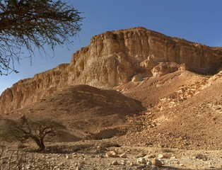 Acacia trees at the bottom of the desert hill at sunset