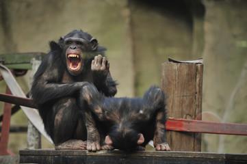animales en zoologico