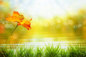 abstract natural background with flower