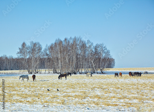 Horses on snow field