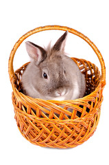 Rabbit sitting in a wicker basket