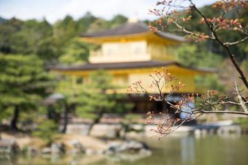 Sakura Flower with background of Kinkakuji Temple,  Kyoto ,Japan