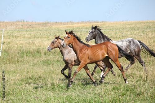 Batch koni działających na pastwisku