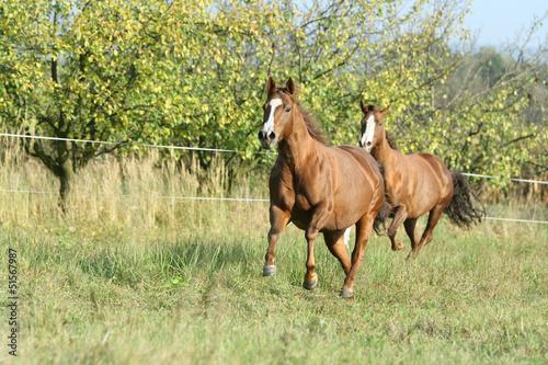 Dwa konie działające na pastwisku jesienią