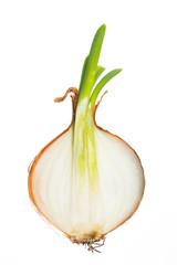 Halbierte Zwiebel vor weißem Hintergrund