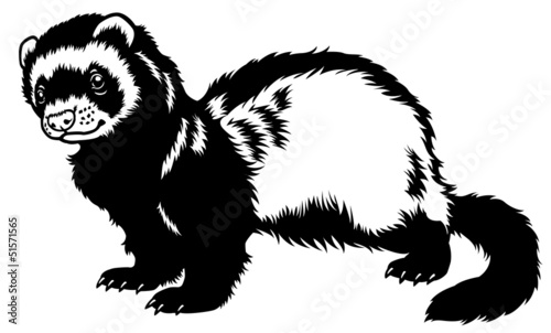 ferret black white