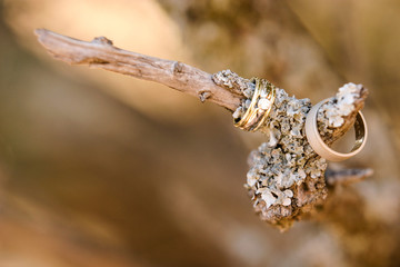 wedding rings on a branch
