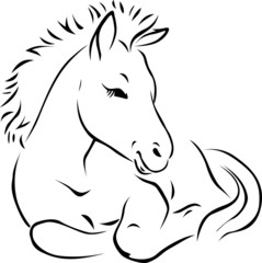 foal - black outline illustration