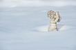 Engelsfigur im Schnee 3