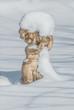 Engelsfigur im Schnee 2