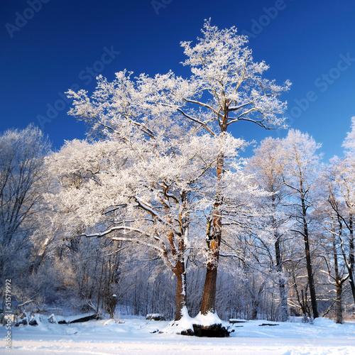 mróz na drzewie