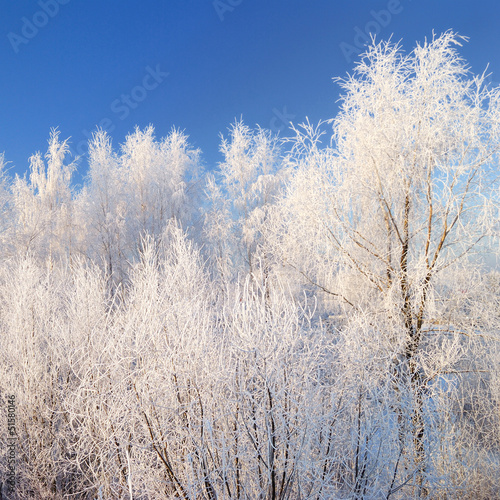Zimowy krajobraz z snoe pokryte drzewami z błękitnego nieba
