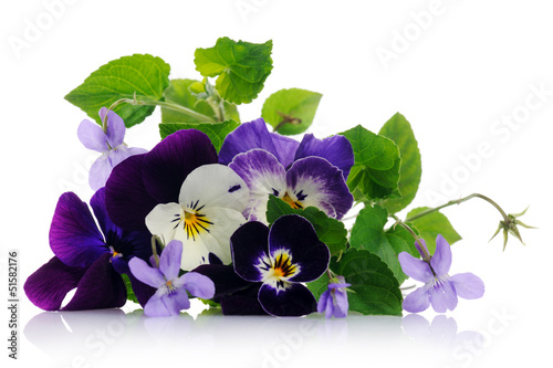 Staande foto Pansies pansies and violets