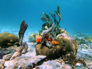 Brain coral and sea sponges
