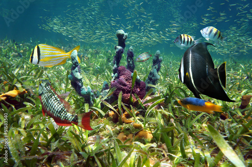 Colorful sea floor and fish