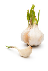 garlic on white background with clipping path