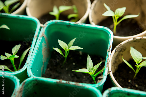 A bunch of baby plants growing inside of pots