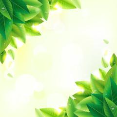 緑の葉 水滴 光 風