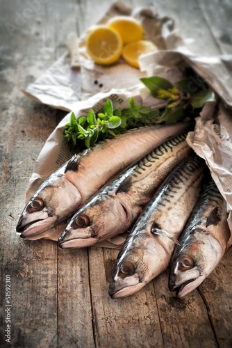 mackerel - sgombri
