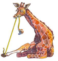 Giraffe - most high animal in the World