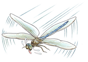 The sweaty dragonfly has got tired of long flight