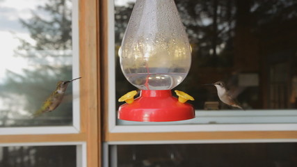 Two hummingbirds at a feeder.
