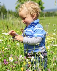 Kleinkind erkundet Blumenwiese
