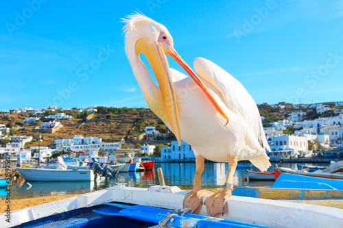 Staande foto Athene Greece, Petros famous pelican of Mykonos
