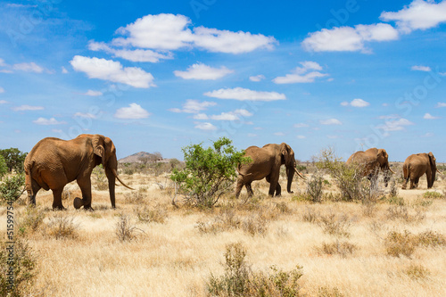 elephants, Tsavo national park, kenya - Africa