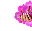 Nägel French - pinke Orchideen