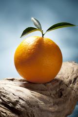 still life of orange.
