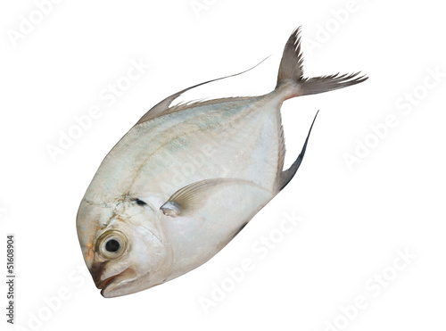 Fresh raw fish isolated on white background