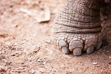 Galapagos giant tortoises foot