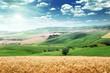 summer landscape of Tuscany, Italy