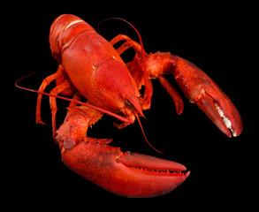Red lobster, on black background