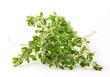 Fresh thyme on white background
