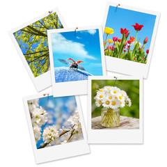 Fotografieren im Frühling, Frühlingsblumen, Jahreszeit