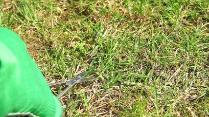 Lawn care with nail scissors