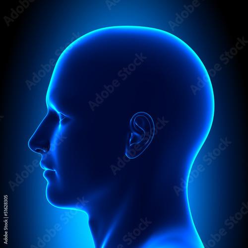 Leinwanddruck Bild Anatomy Head - Left Side View - Blue concept