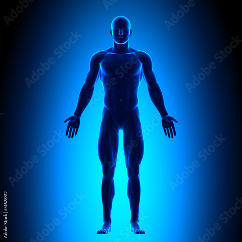Anatomy Body - Front View - Blue concept