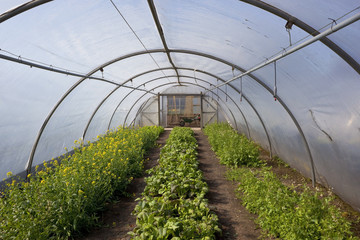 poly tunnel in springtime